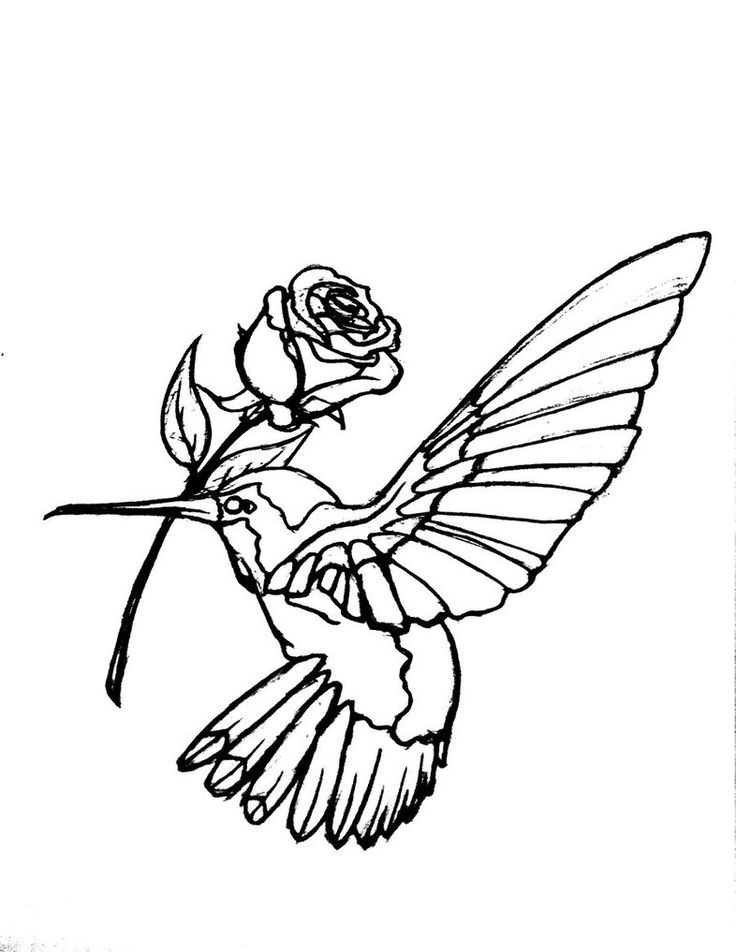 736x952 Collection Of Hummingbird With Flower Tattoo Design