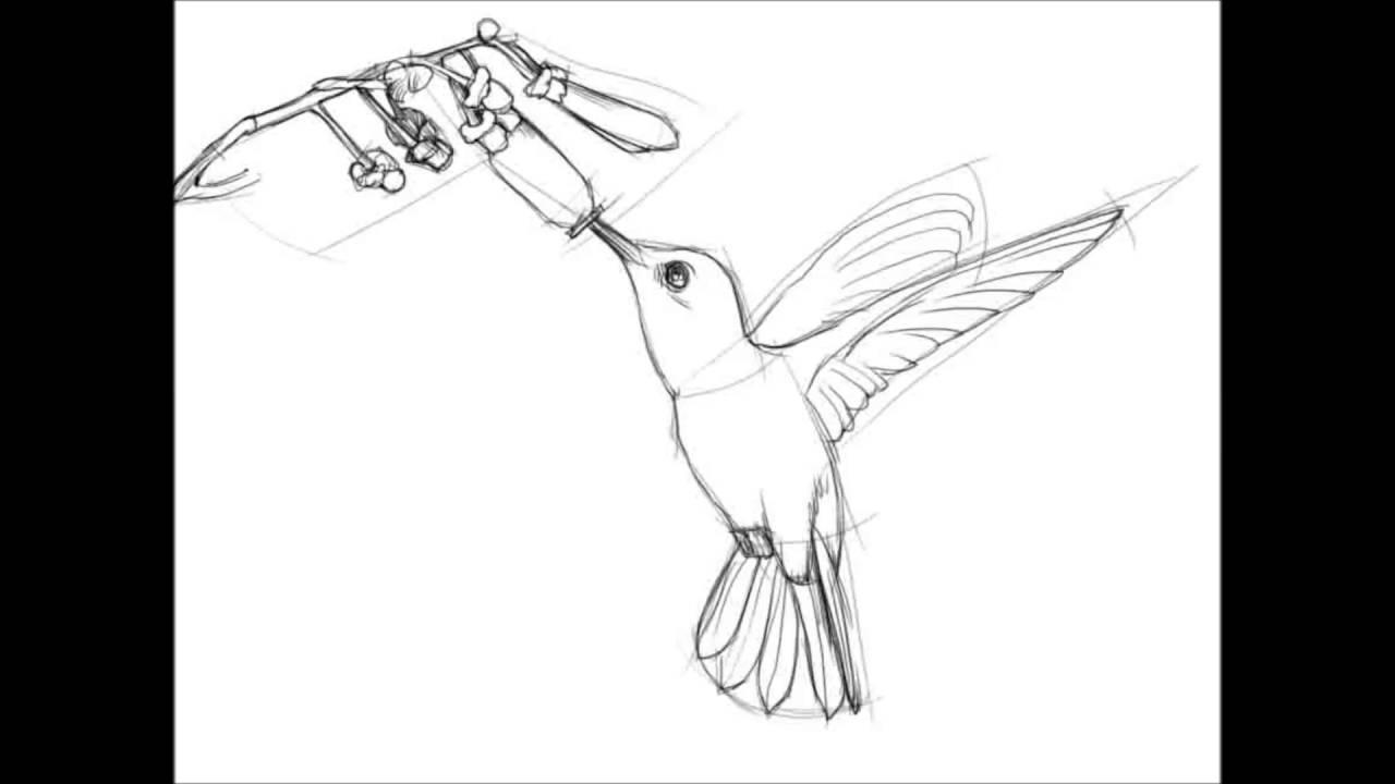 1280x720 How To Draw A Hummingbird