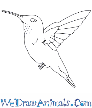 300x350 How To Draw A Rufous Hummingbird