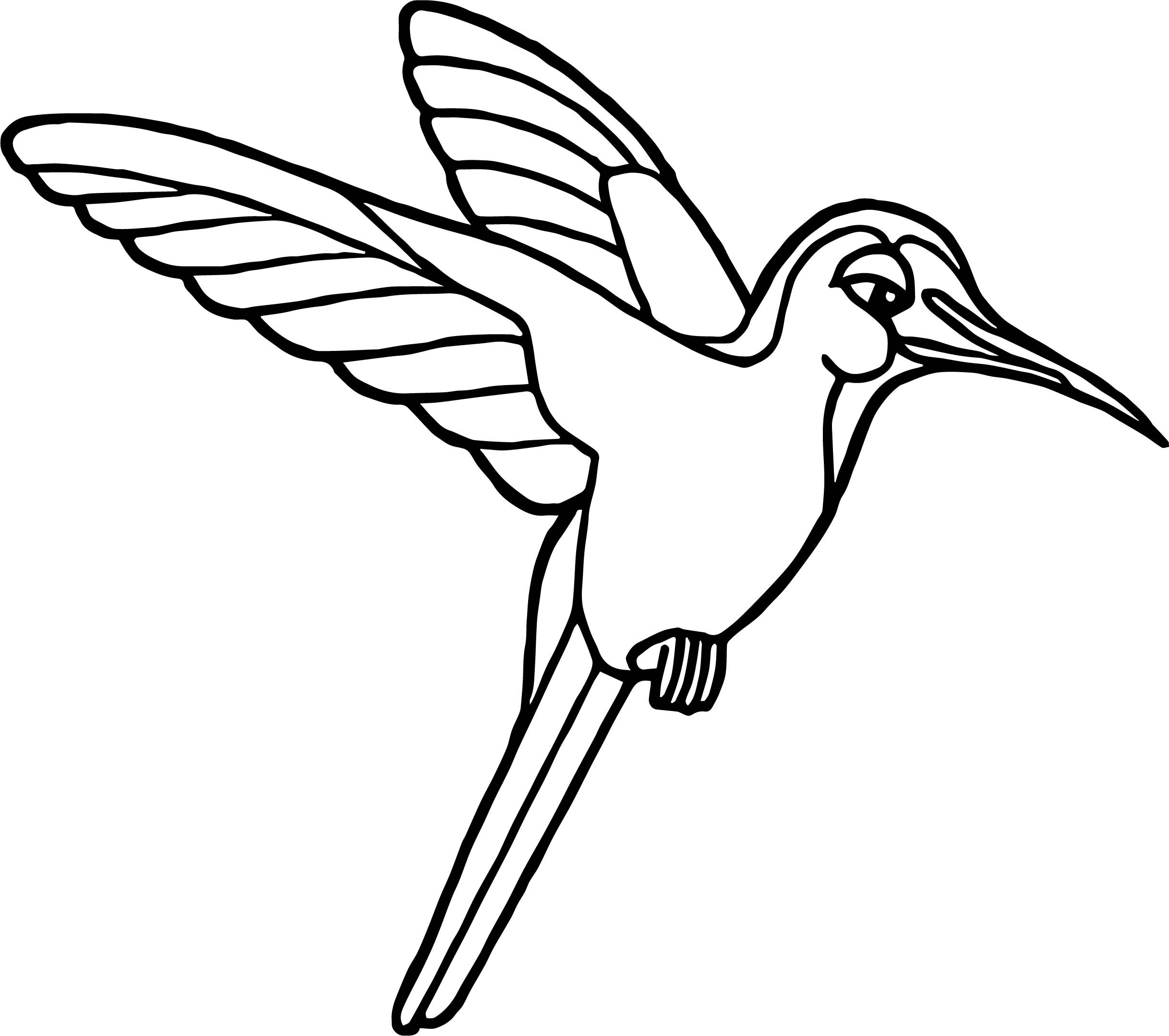 2435x2158 Hummingbird Animal Coloring Pages Elegant Birds The Rainforest