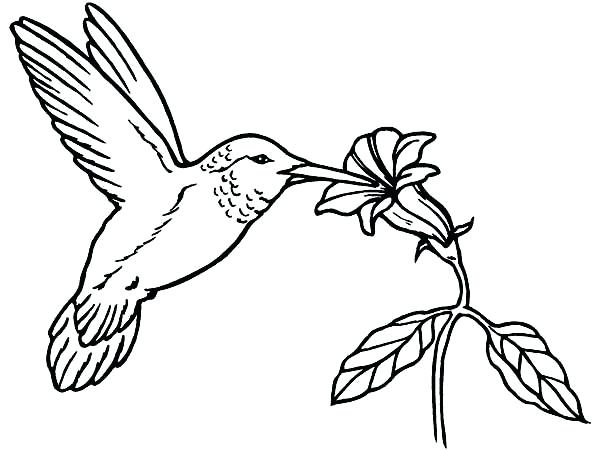 600x450 Best Of Hummingbird Coloring Pages Images Hummingbird Coloring