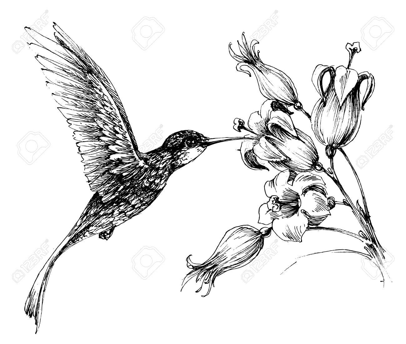 1300x1101 Hummingbird In Flight Drawing Royalty Free Cliparts, Vectors,