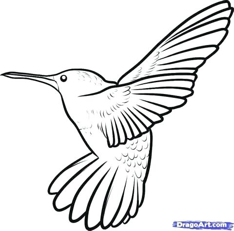 480x472 Minimalist Hummingbird Coloring Pages Print Best Colors Ideas