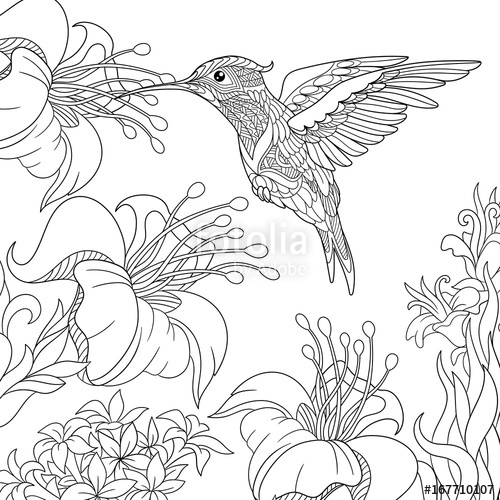 500x500 Coloring Page Of Hummingbird And Hibiscus Flowers. Freehand Sketch