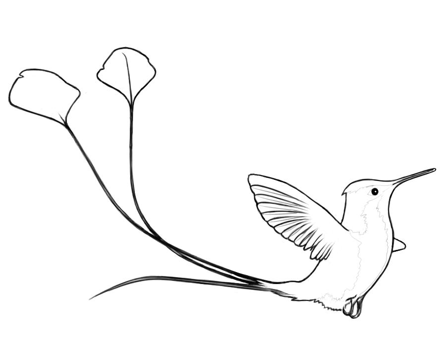 900x700 Daily Drawing Day 78 Spatuletail Hummingbird