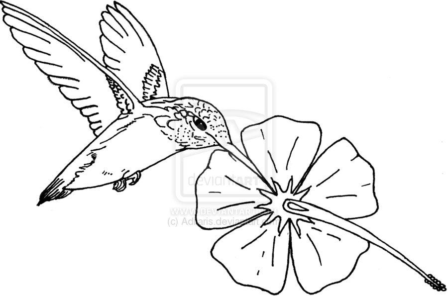 900x595 Drawn Hummingbird Hibiscus