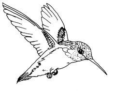 236x188 Free Hummingbird Clip Art Image