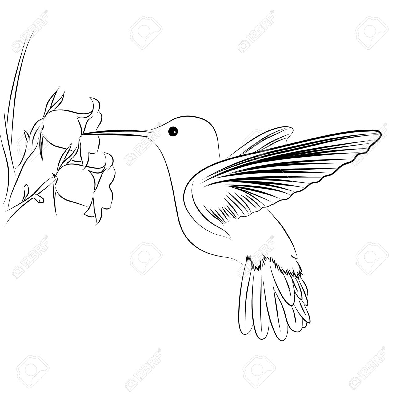 1300x1300 Beak Clipart Hummingbird