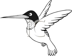 300x233 Page Of A Hummingbird