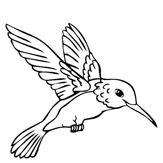 560x560 Remarkable Hummingbird Coloring Page 55 For Your Line Drawings