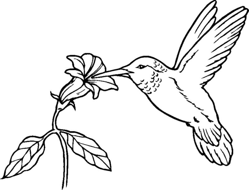 800x613 Hummingbird Clip Art Black And White