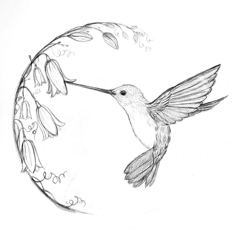 900x911 Simple Hummingbird Sketch