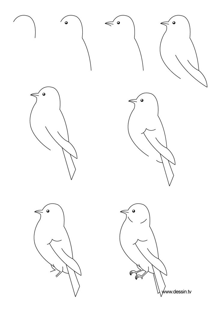 736x1040 Photos Bird Drawing Easy Step By Step,