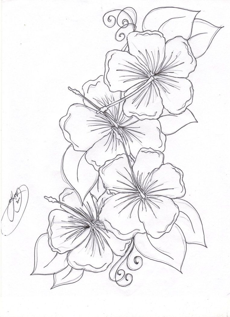 762x1049 Pictures Hawaiian Flower Sketches,
