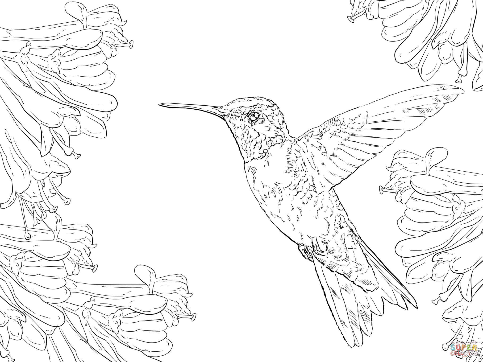 2048x1536 Realistic Ruby Throated Hummingbird Coloring Page Free Printable