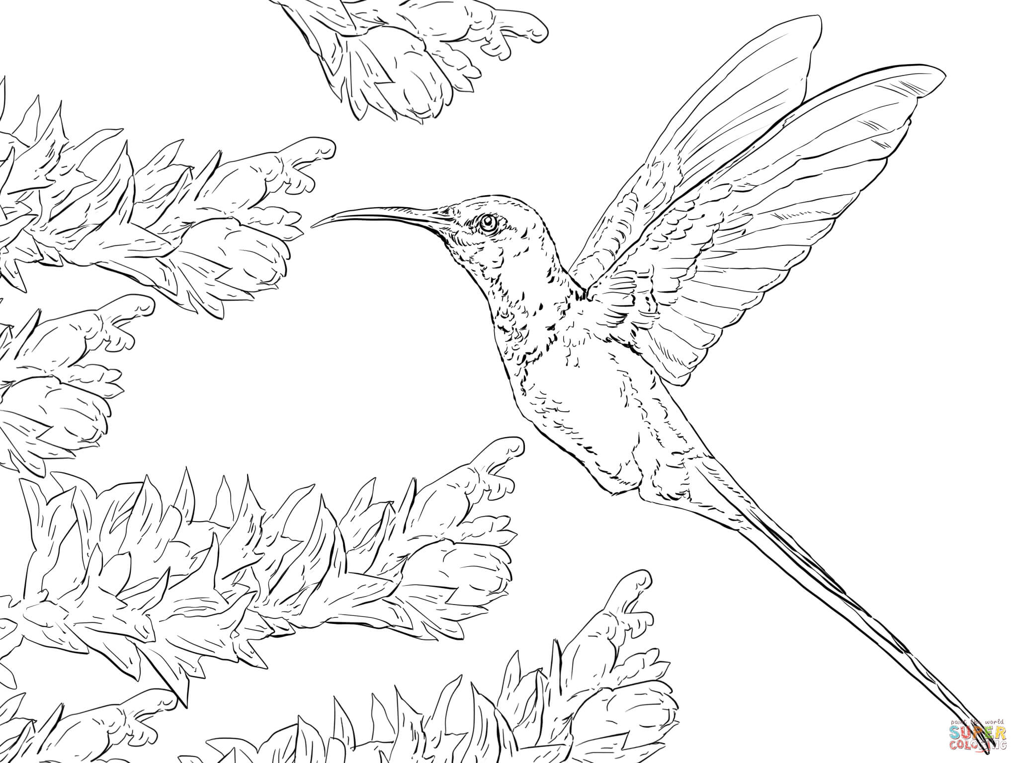 2048x1536 Swallow Tail Hummingbird Coloring Page Free Printable Coloring Pages
