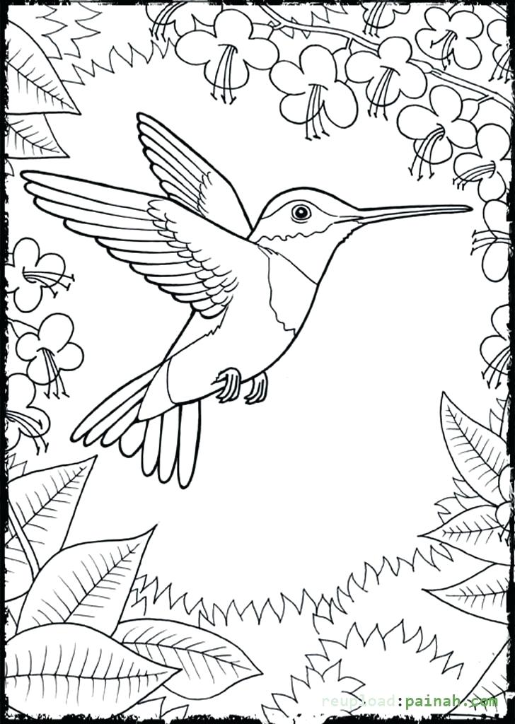 728x1024 Hummingbird Coloring Page Hummingbird Coloring Pages Hummingbird