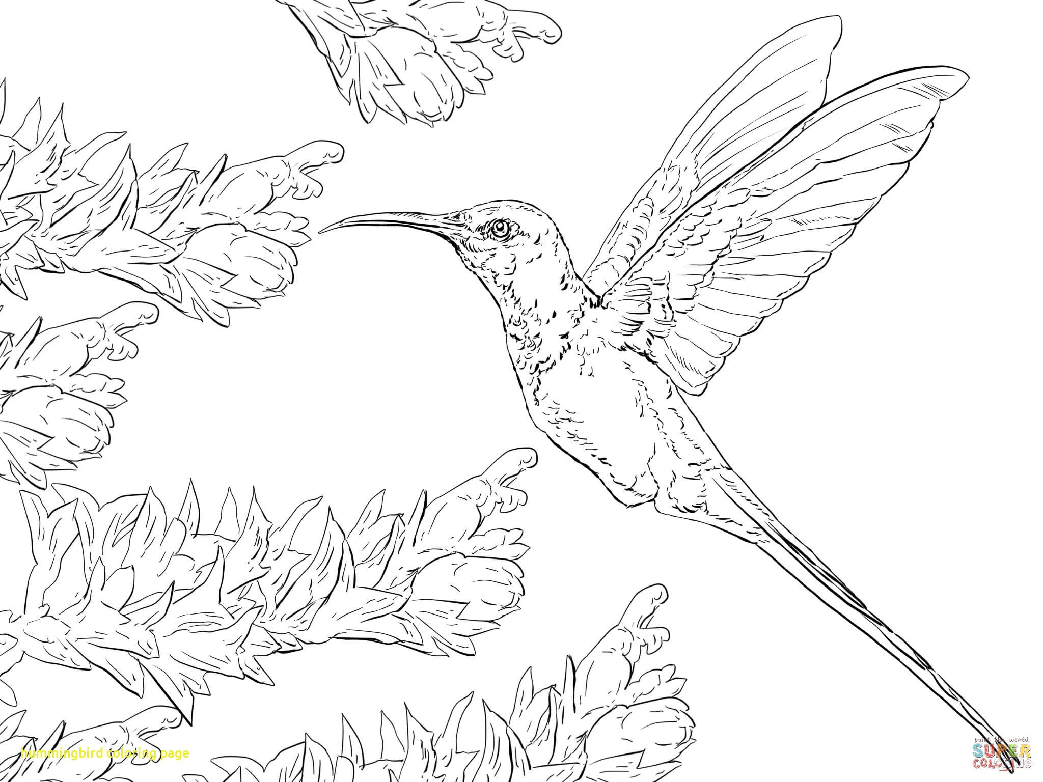 2048x1536 Hummingbird Coloring Page With Free Printable Hummingbird Coloring