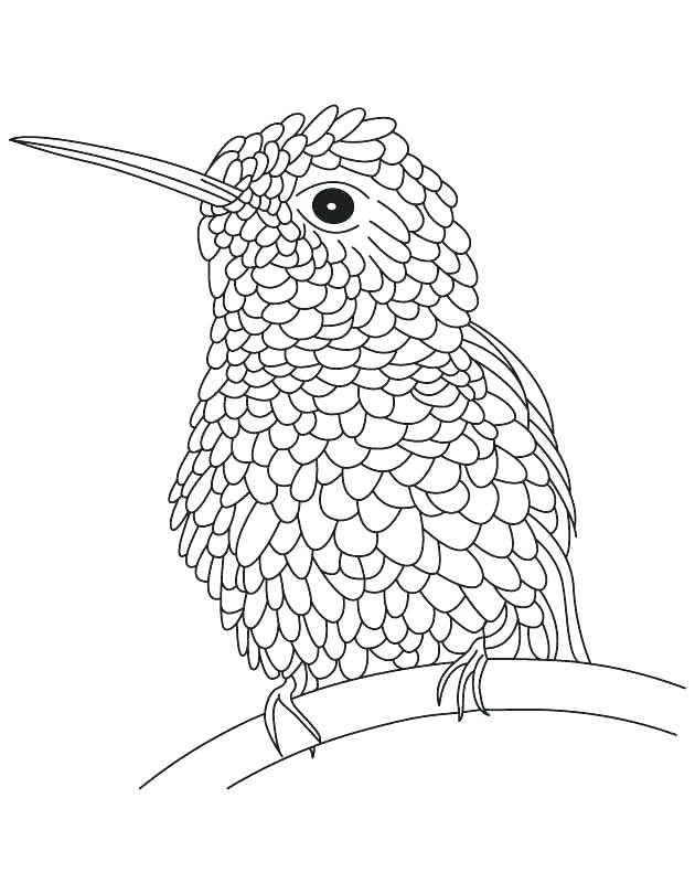 630x810 Hummingbird Coloring Pictures Hovering Hummingbird Coloring Page
