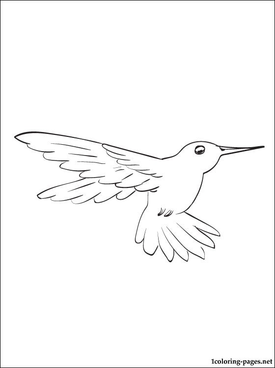 560x750 Hummingbird Coloring Page For Free Coloring Pages