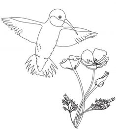 236x278 Hummingbirds Coloring Page