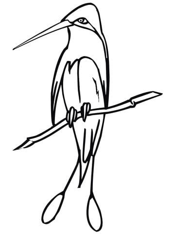 360x480 Marvellous Spatuletail Hummingbird Coloring Page Free Printable