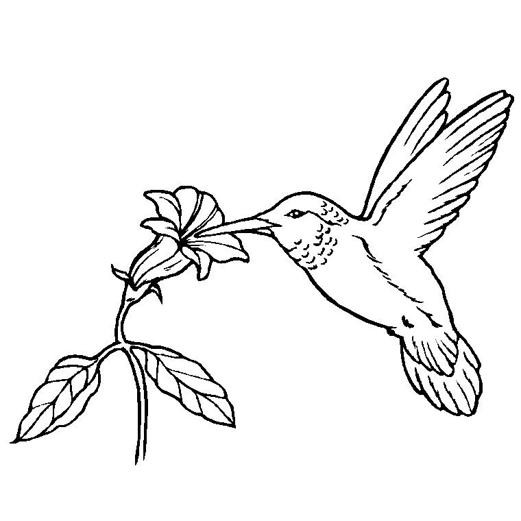 760x760 Coloriage Oiseau Exotique Fauna Bird, Embroidery