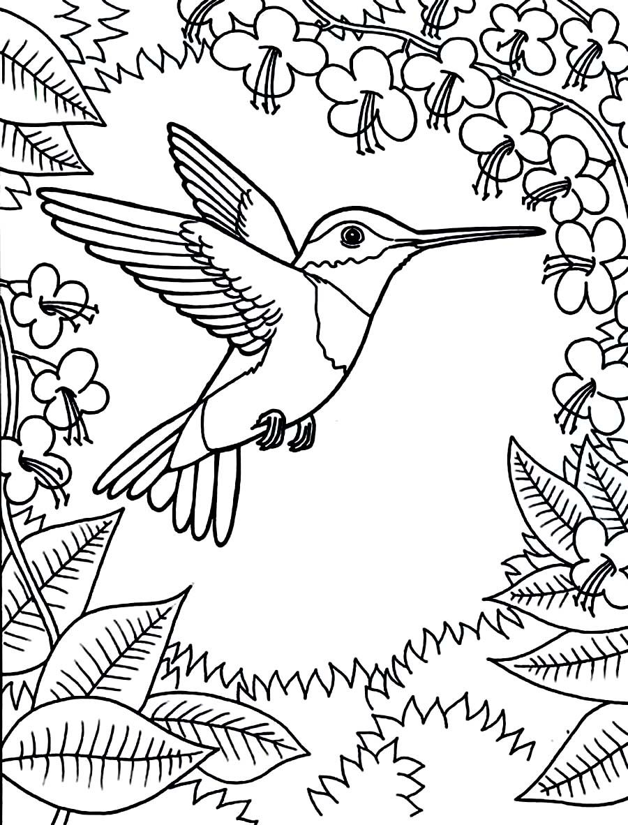 900x1182 Printable Hummingbird Coloring Pages Coloring Animal Kingdom