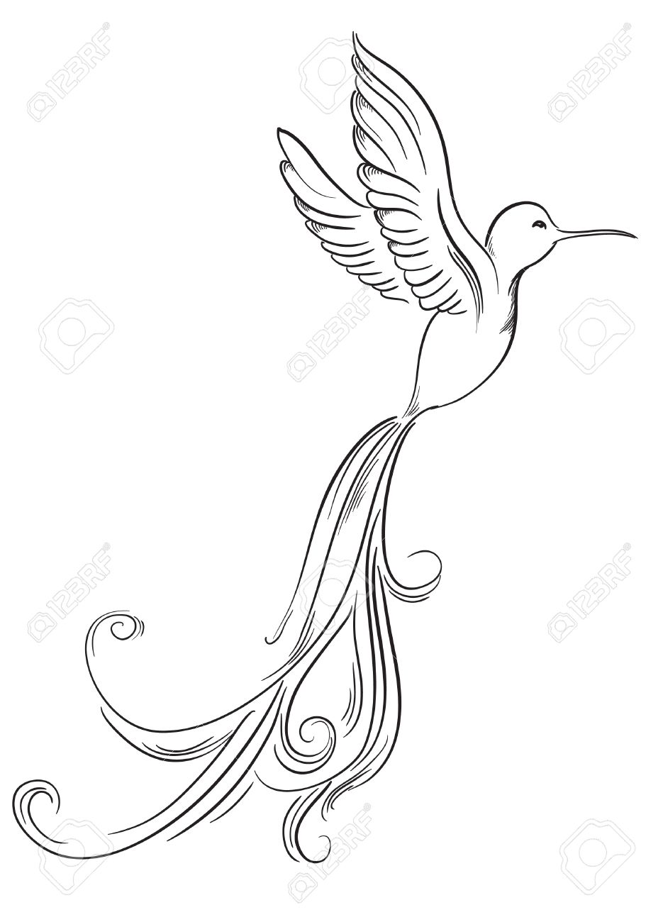 935x1300 Sketch Of Hummingbird Hand Drawn Tattoo Birds Royalty Free