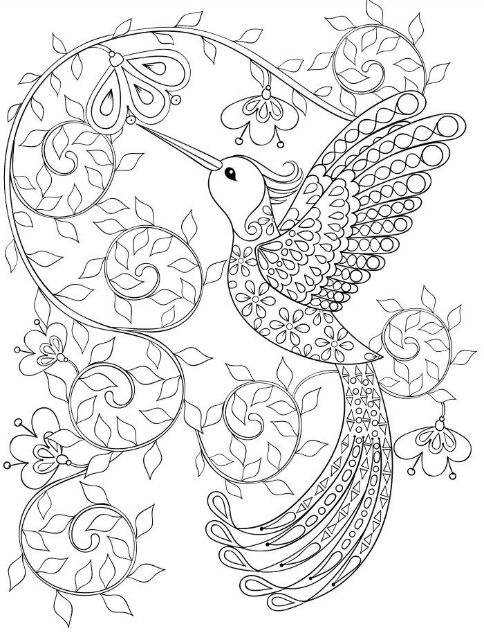 700x924 Hummingbird Coloring Pages For Adults Coloring Pages