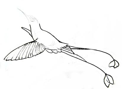 412x300 How To Draw A Hummingbird