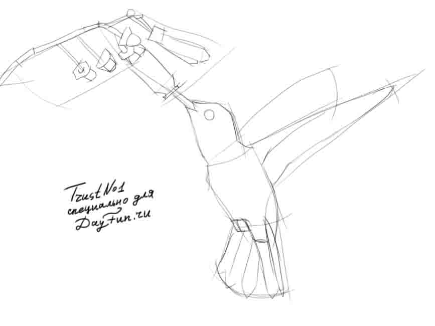 867x650 How To Draw A Hummingbird Step By Step