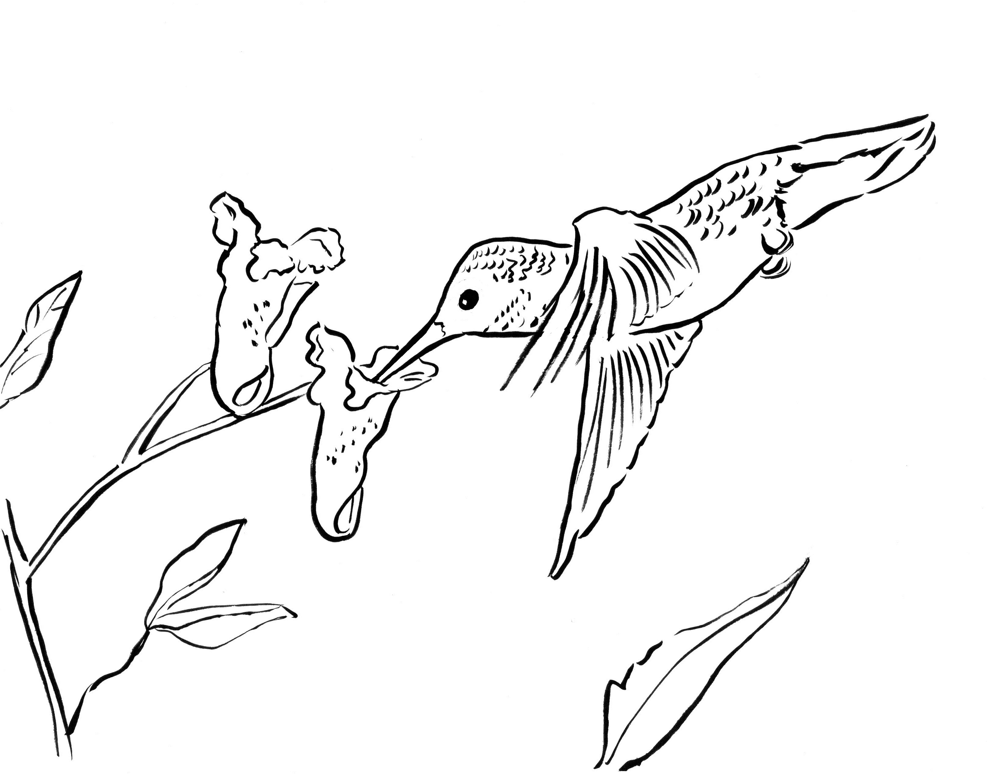 3258x2545 Hummingbird Coloring Page