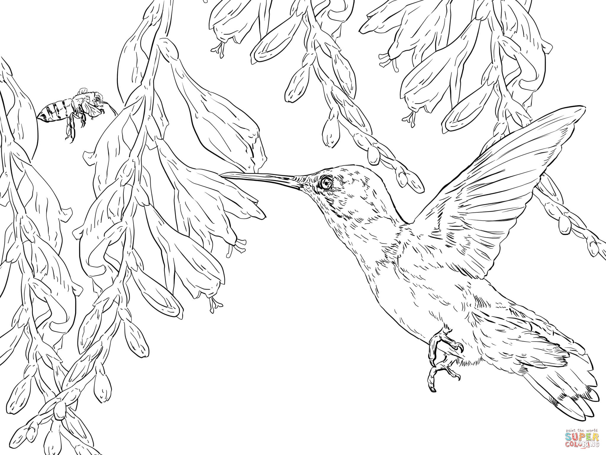 2048x1536 Bee Hummingbird Coloring Page Free Printable Coloring Pages