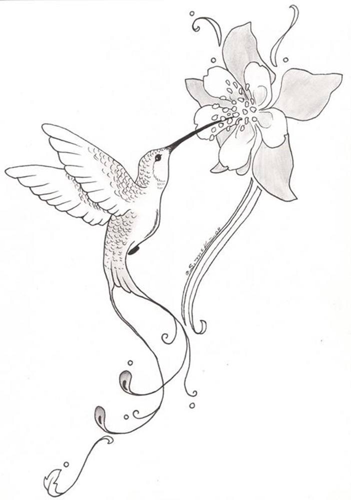 702x999 Image Result For Simple Hummingbird Sketch +++birds Hummers
