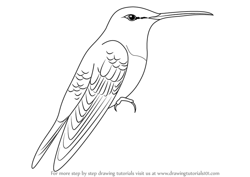 800x566 Learn How To Draw A Gould's Emerald (Birds) Step By Step Drawing