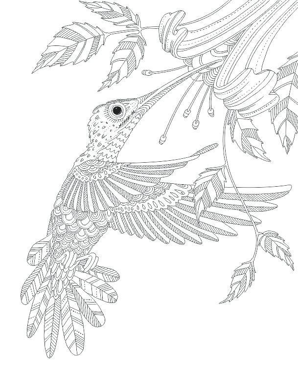 609x751 Coloring Pages Of Hummingbirds Hummingbird Coloring Pages