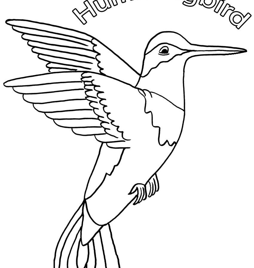 850x900 Popular Hummingbird Coloring Pictures Beautiful Page Printable