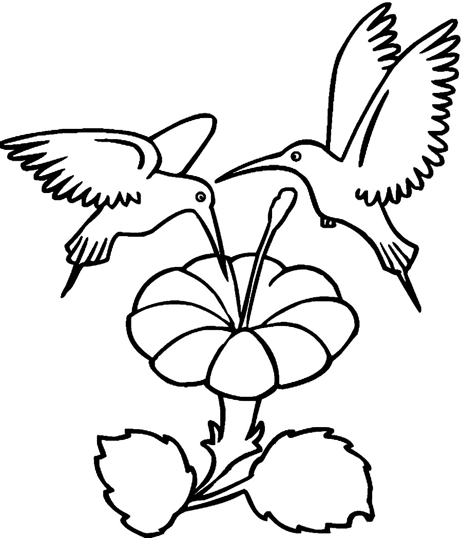 900x1048 Printable Hummingbird Coloring Pages Coloring Me