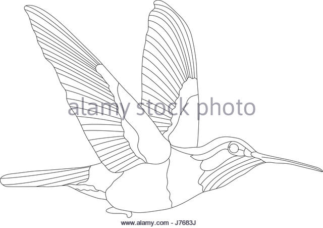 640x451 Colour Illustration Paint Hummingbird Draw Stock Photos Amp Colour