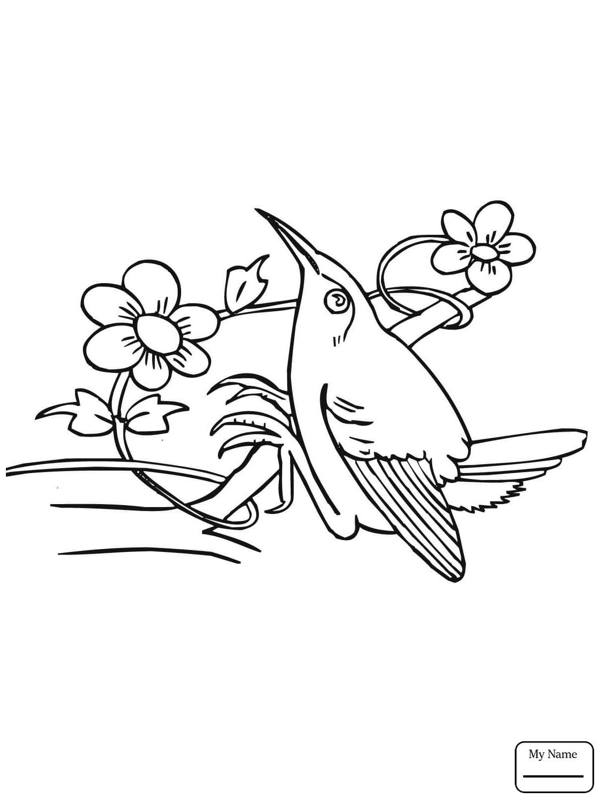 1224x1632 Birds Black Chinned Hummingbird Hummingbirds Coloring Pages