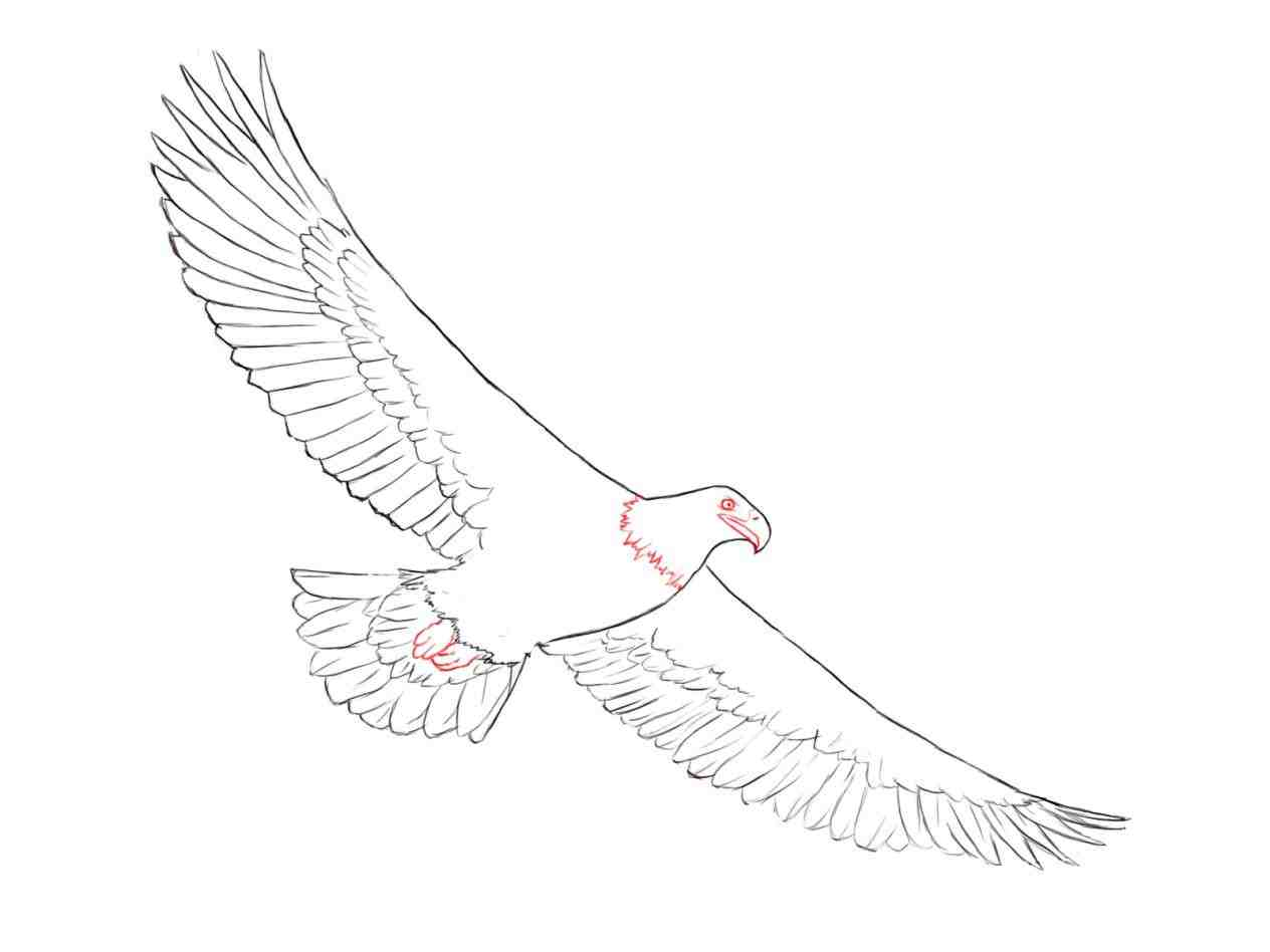 1264x948 How To Draw Eagle Step By Step