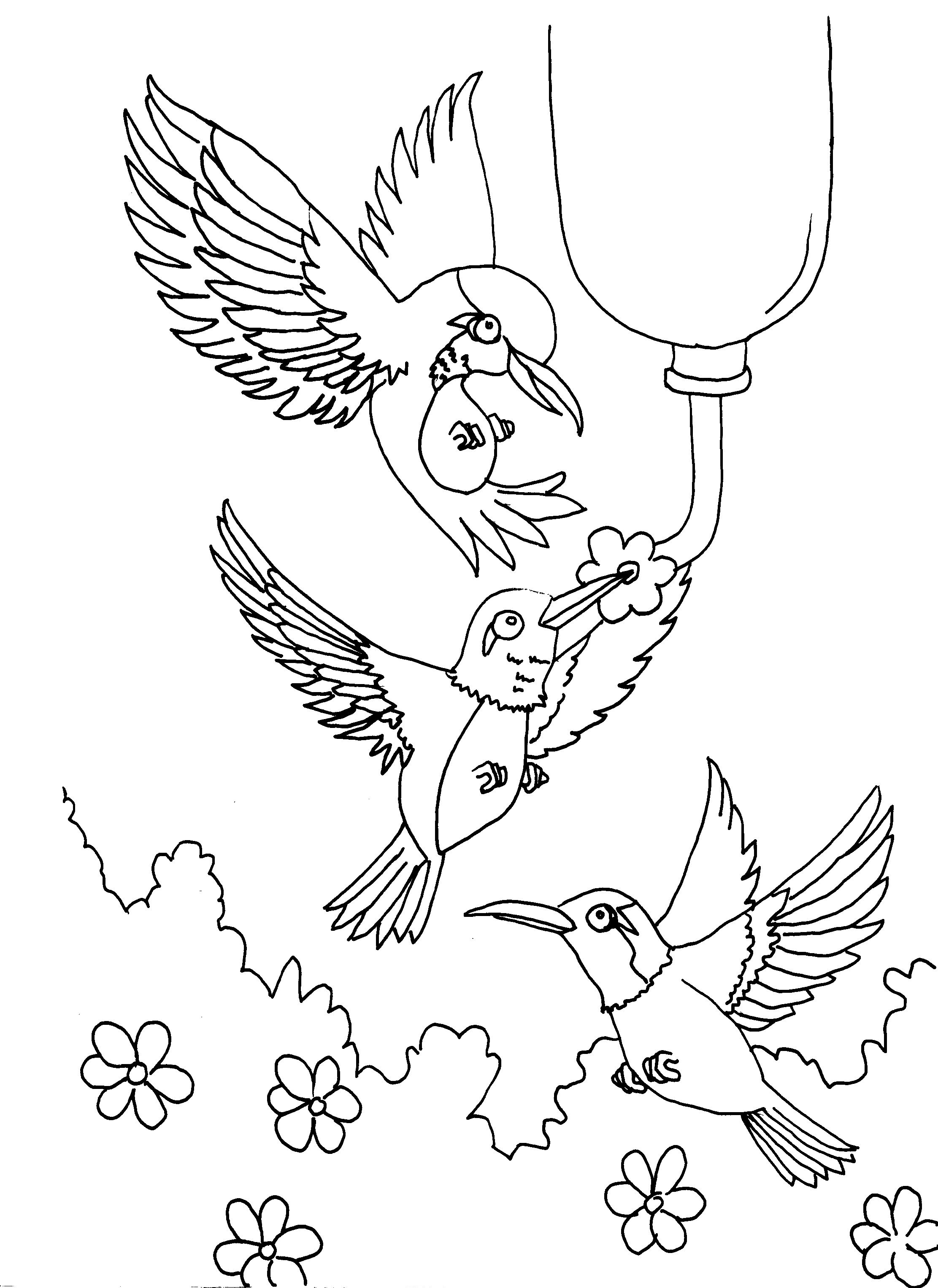 2223x3054 Hummingbirds Feeding Adult Coloring Pages