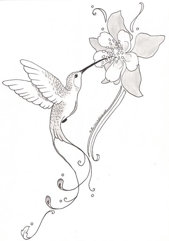 562x800 Hummingbirds And Flowers Drawing Thin Blog