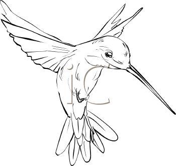 350x330 Best Hummingbird Sketch Ideas On Hummingbird