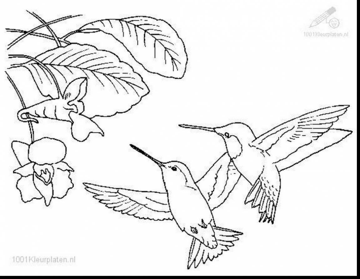 Hummingbird Flower Drawing at GetDrawings