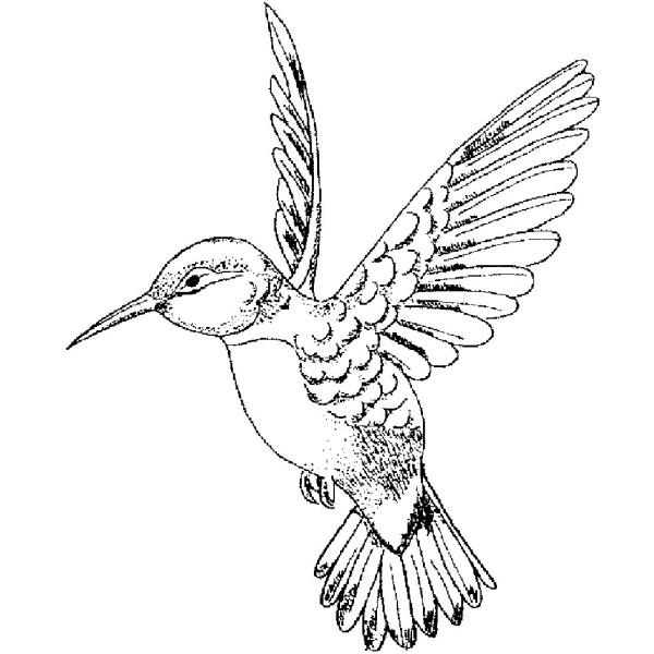 600x600 E696 Fancy Hummingbird Left Hummingbird