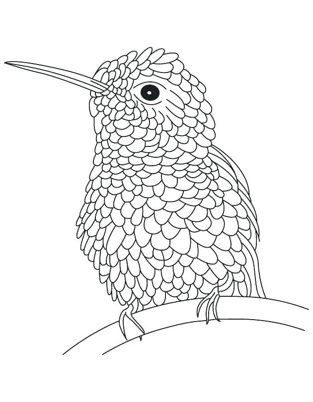 Hummingbird Line Drawing at GetDrawings.com | Free for ...