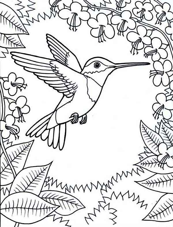 Hummingbird Line Drawing at GetDrawings.com | Free for ...
