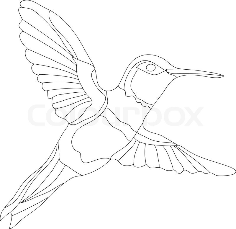 Line Art Hummingbird : Hummingbird line drawing at getdrawings free for